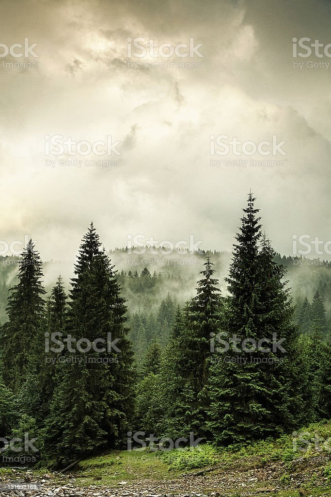 misty and rainy mountain stock photo