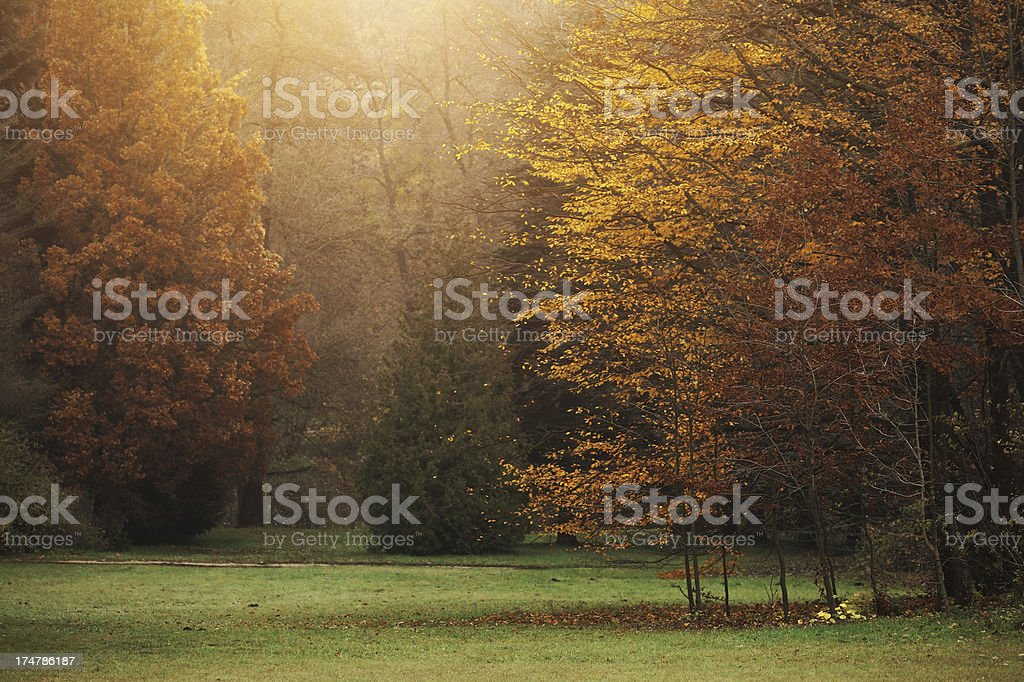 misty autumn forest royalty-free stock photo