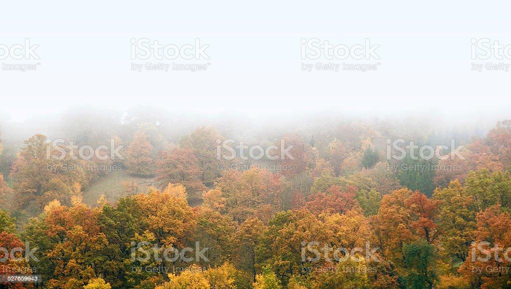 misty autumn forest stock photo