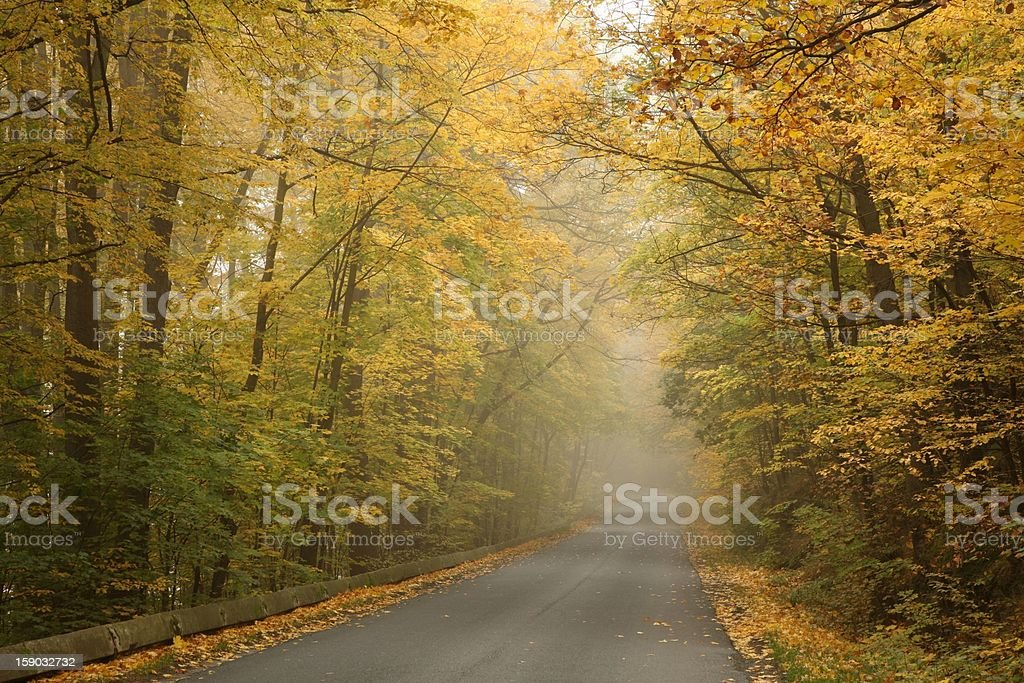 Misty autumn morning royalty-free stock photo