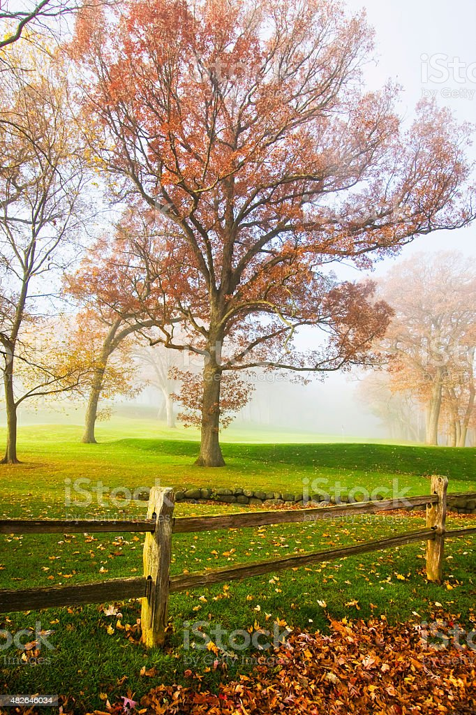 Misty autumn morning stock photo