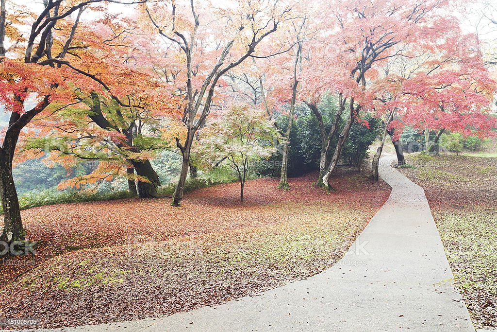 Misty Autumn Path royalty-free stock photo