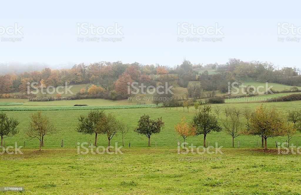 misty autumn scenery stock photo