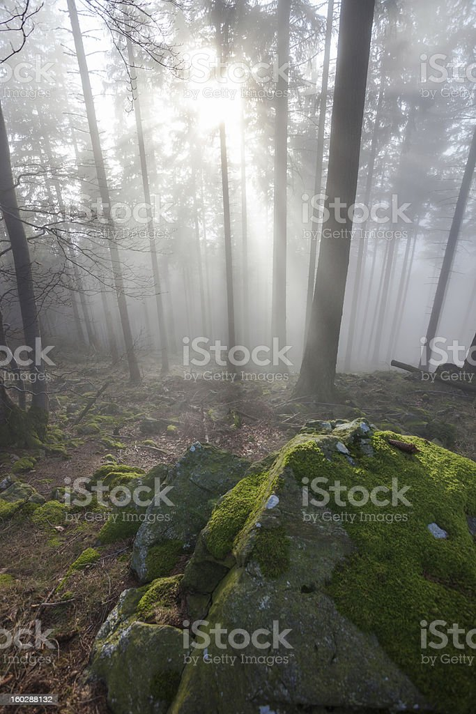 misty black forest royalty-free stock photo