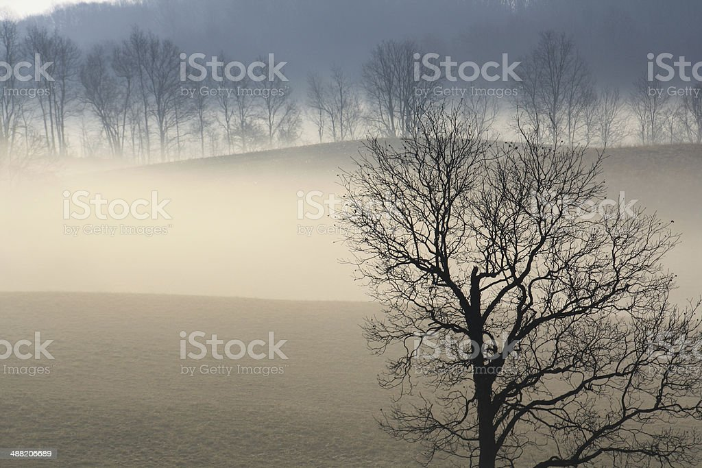 misty blue morning stock photo