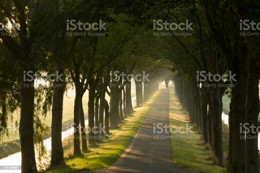 Misty Country Road royalty-free stock photo