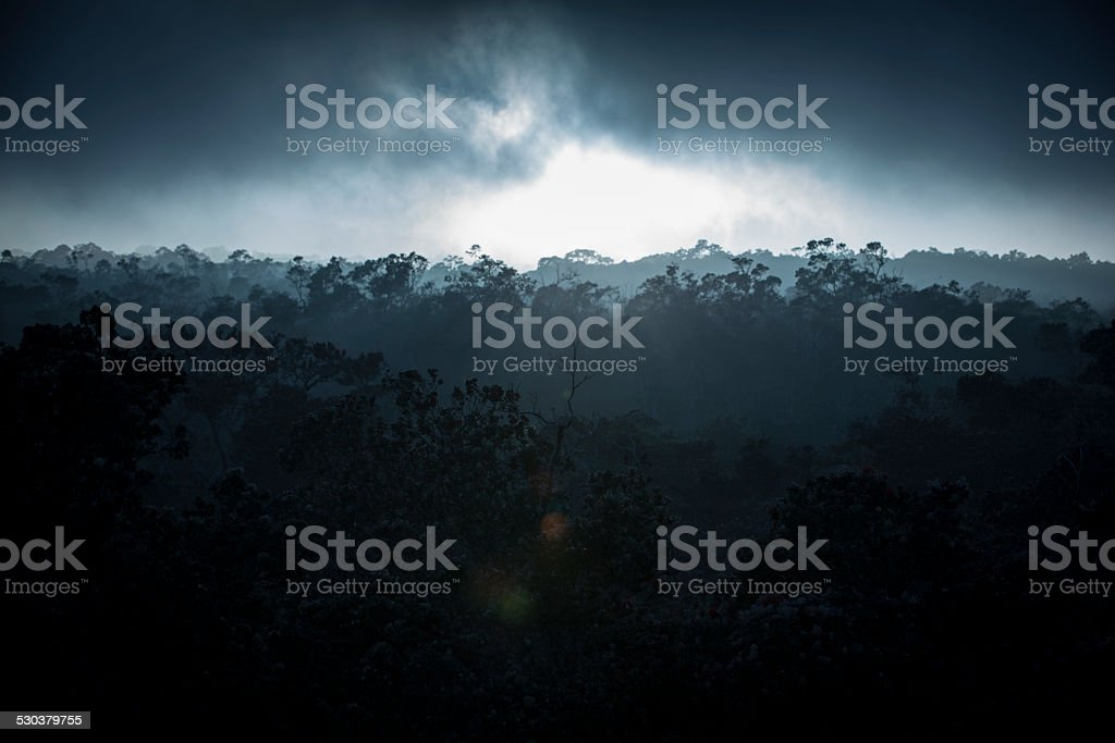 Misty Dark Jungle stock photo