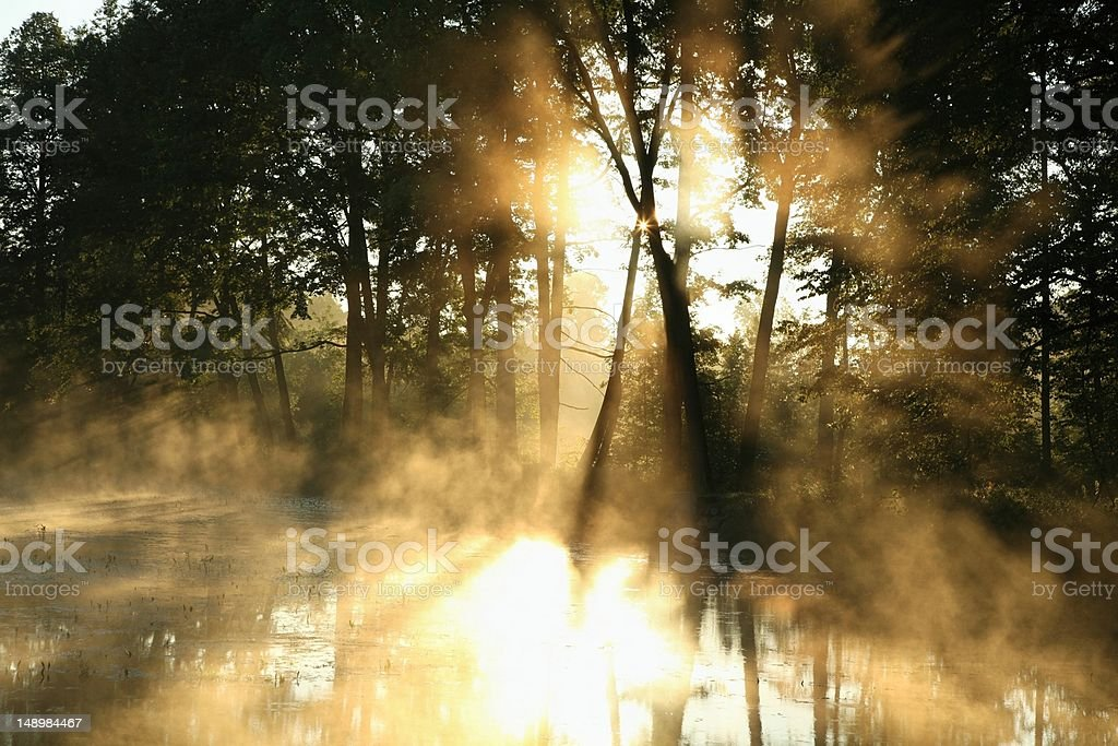 Misty deciduous forest at dawn royalty-free stock photo