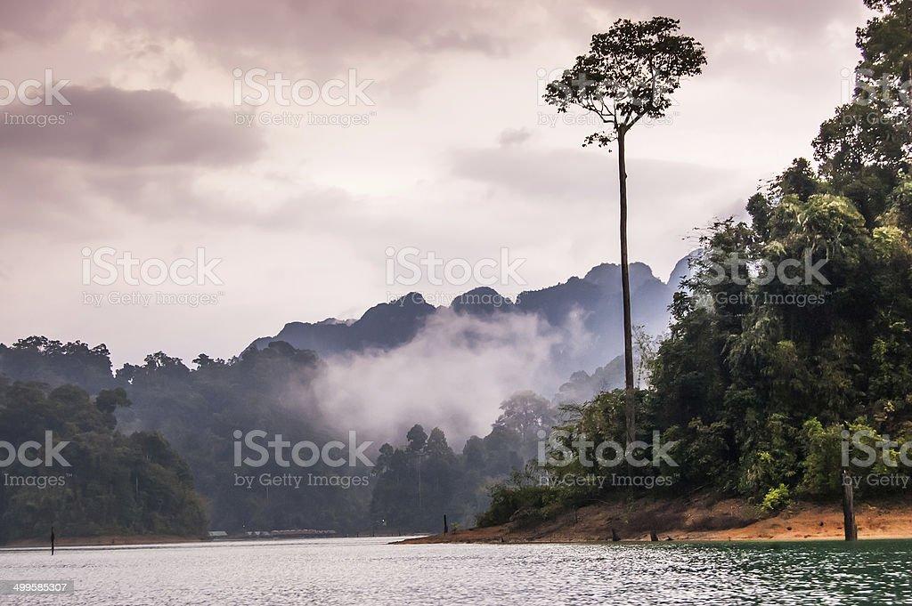 Misty dusk, Khao Sok National Park stock photo