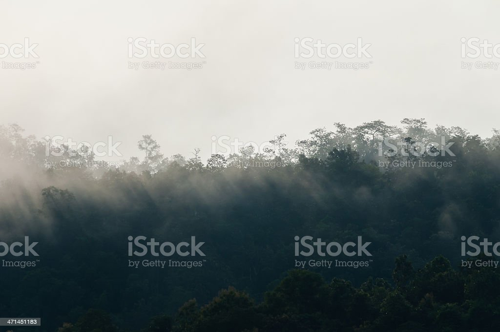 misty early morning forest with a bit of sunlight stock photo
