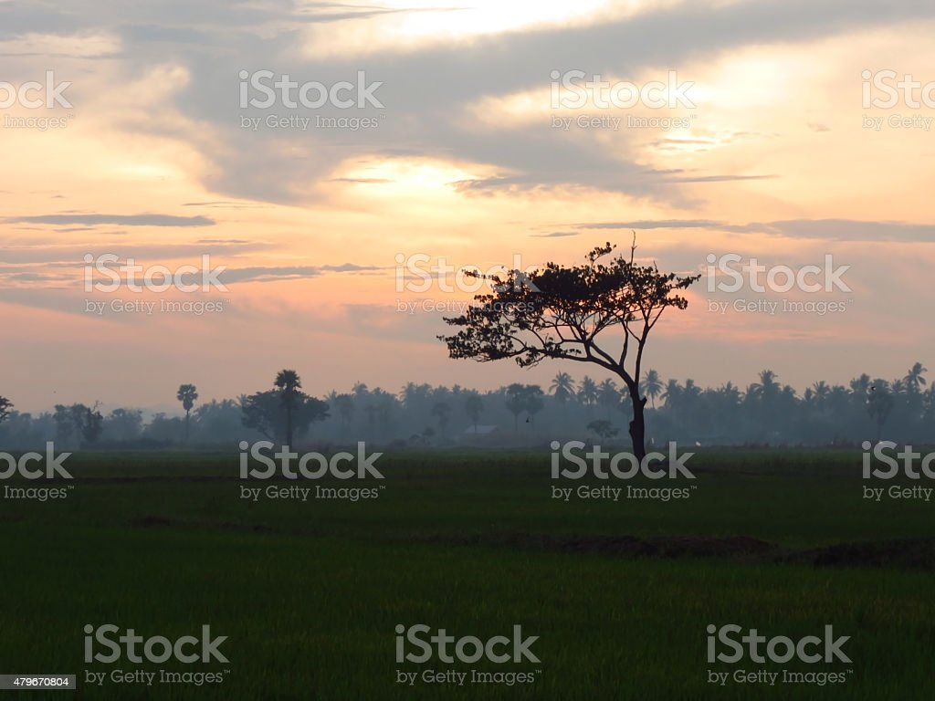 Misty evening with trees in silhouette royalty-free stock photo