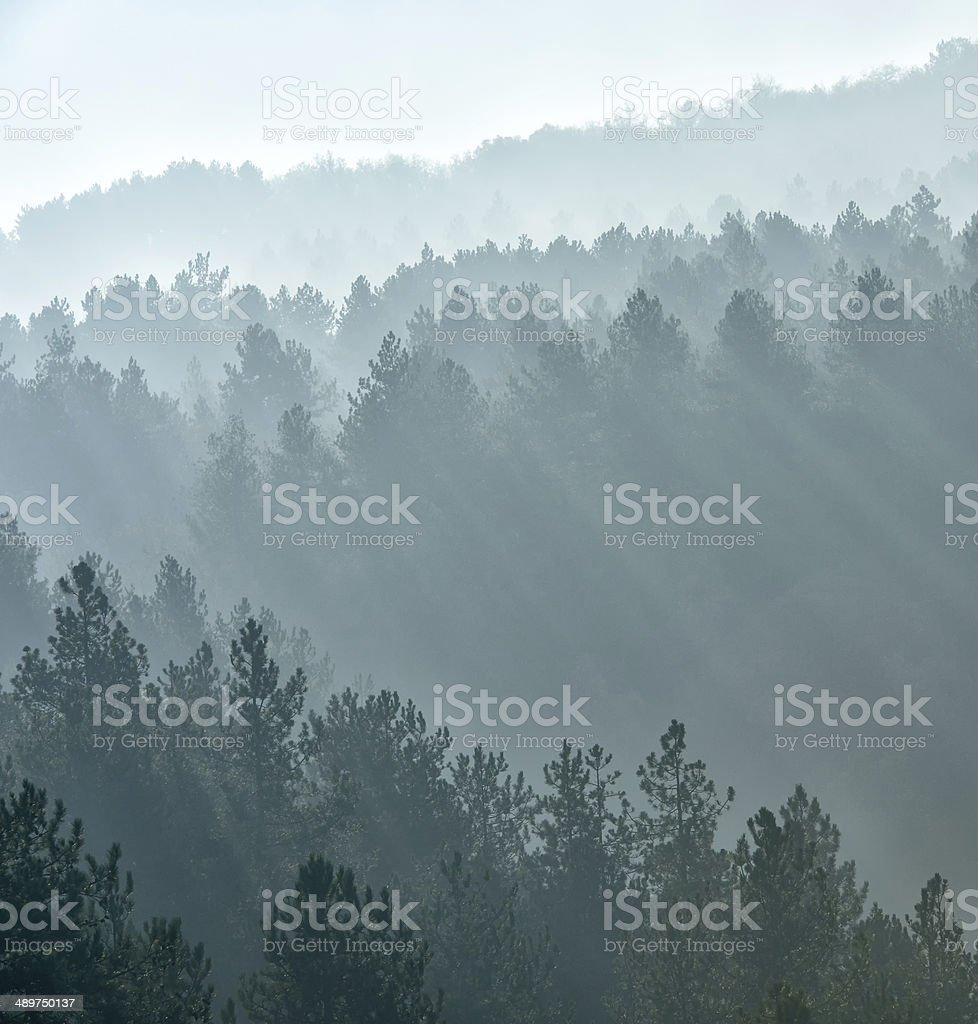 misty fog stock photo