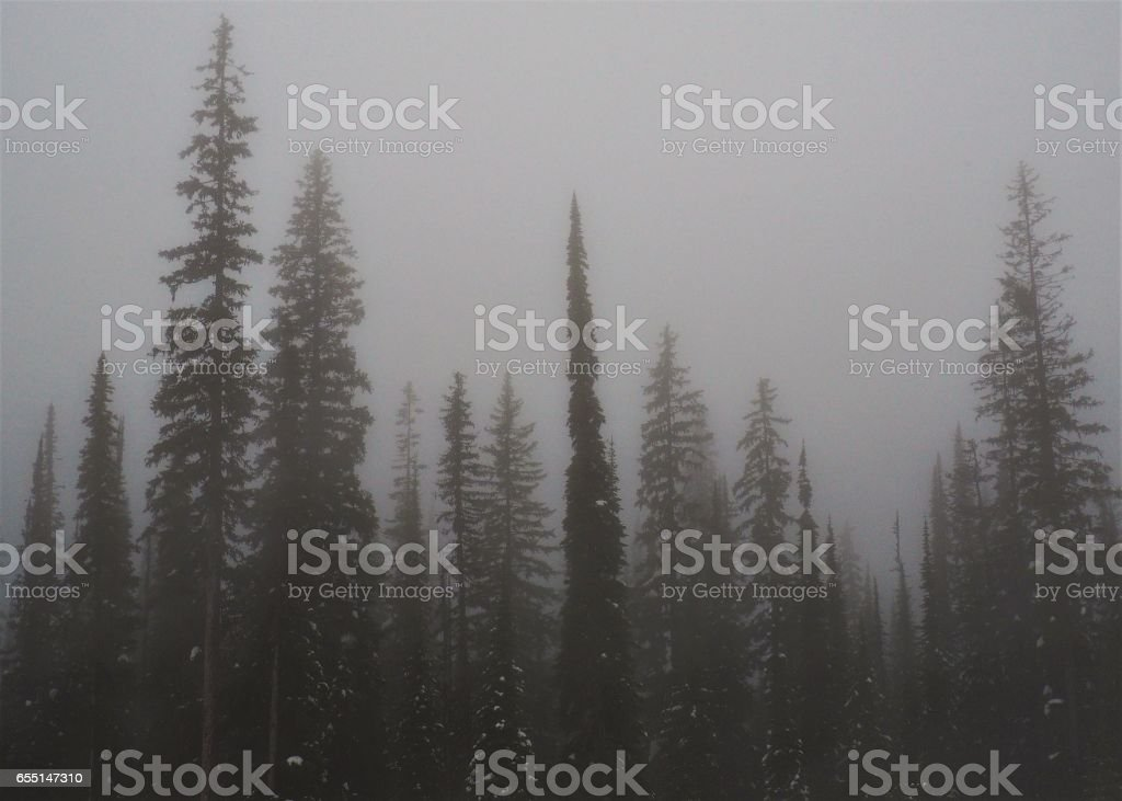 Misty Fog Rolling in Over Forest Trees stock photo