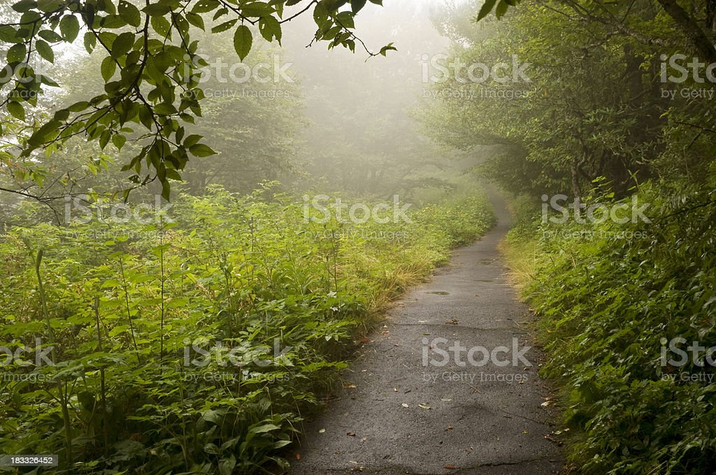 Misty Footpath royalty-free stock photo