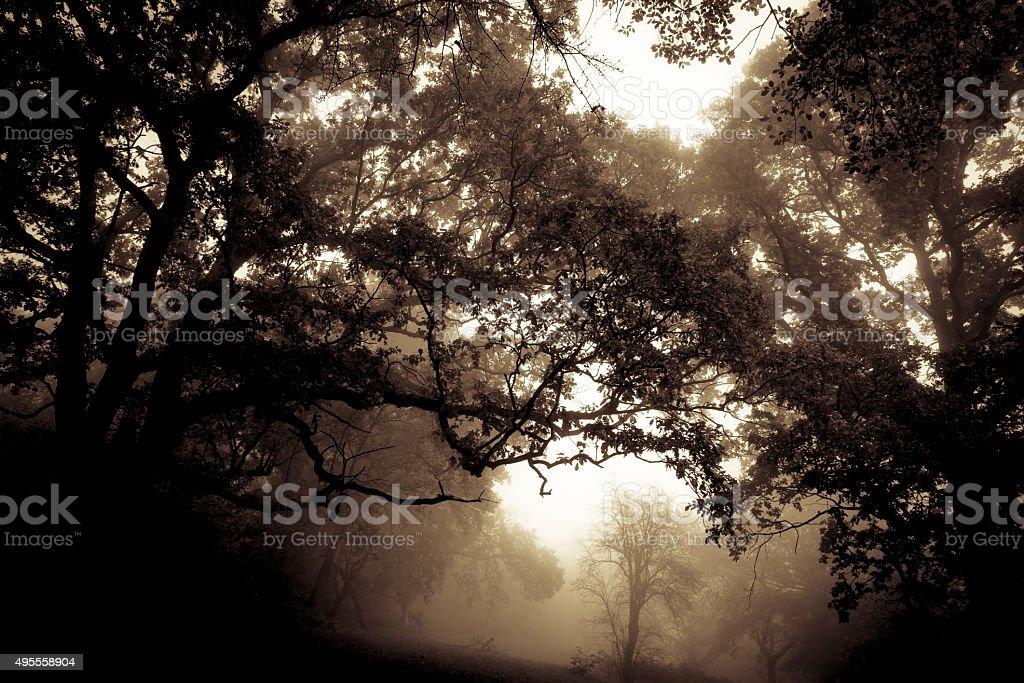 Misty forest dark stock photo