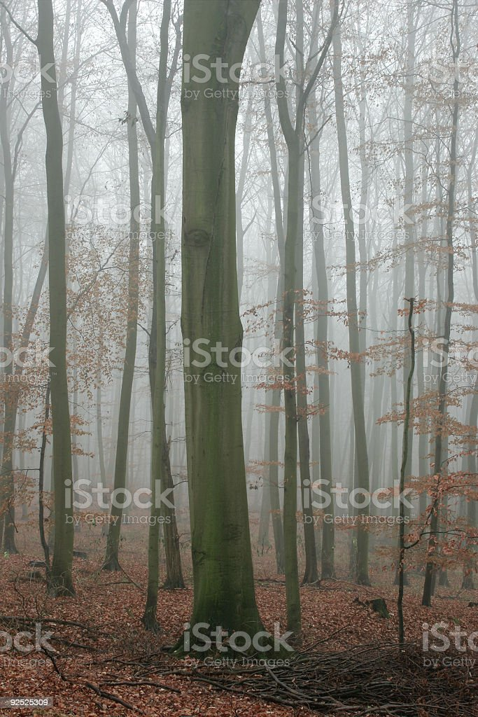Misty Forest III royalty-free stock photo