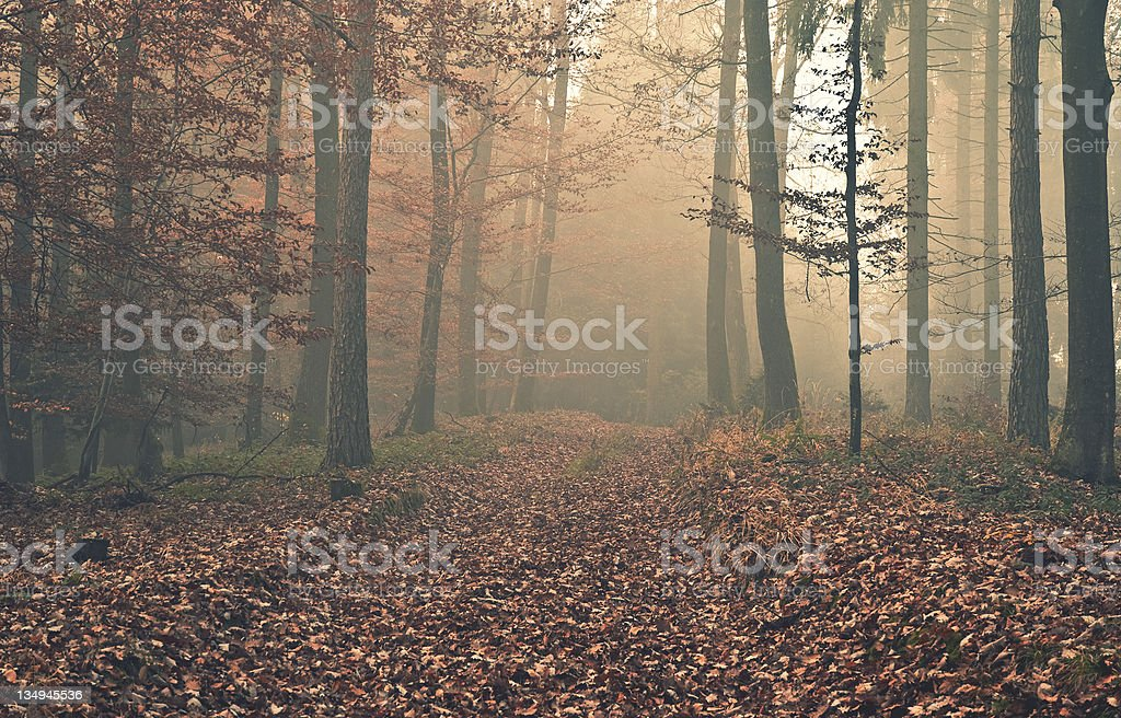 Misty forest in Autumn royalty-free stock photo