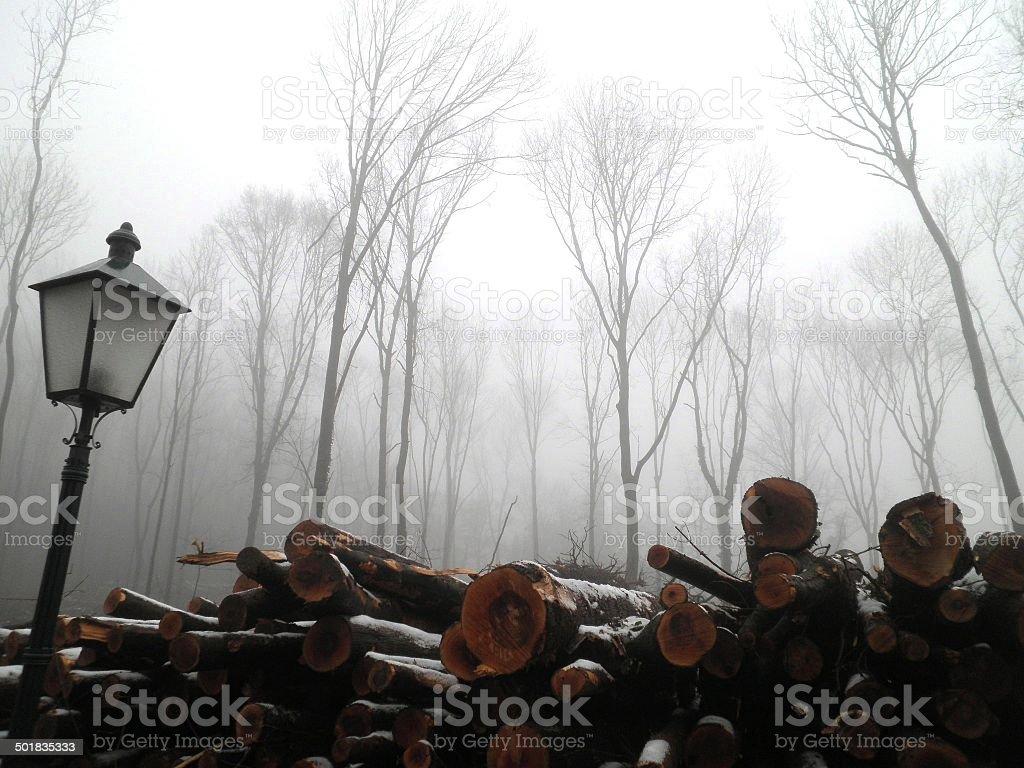 Misty Forest Trees Austria stock photo