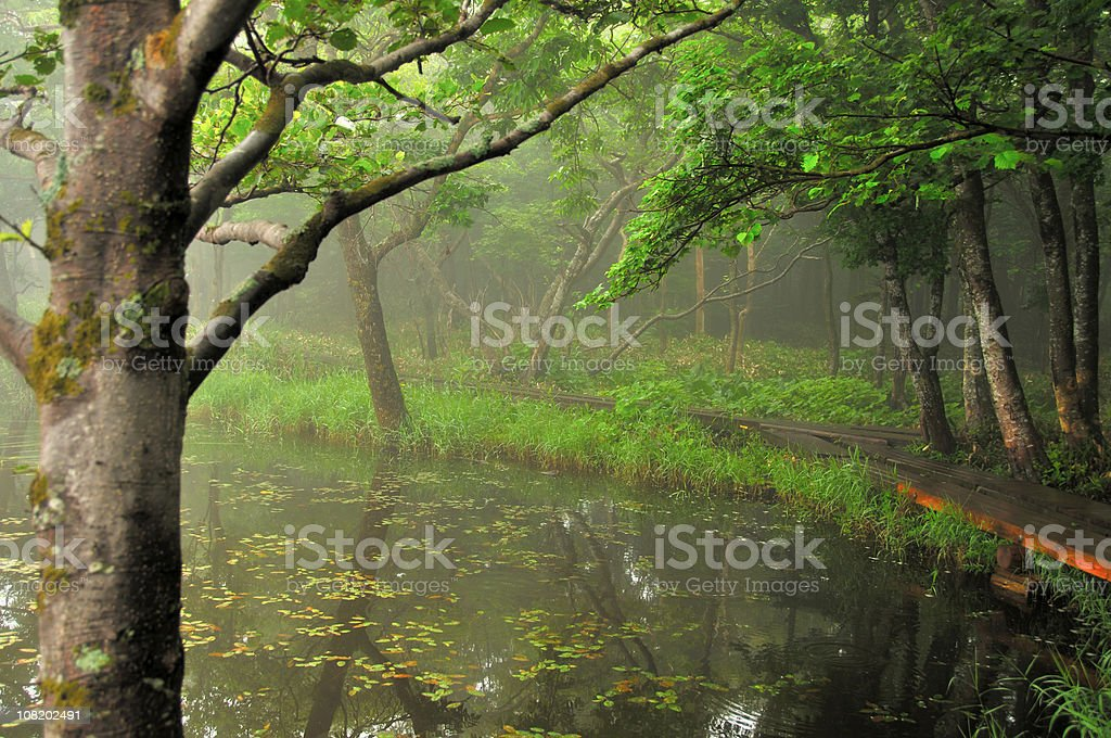Misty Forest with Pond stock photo