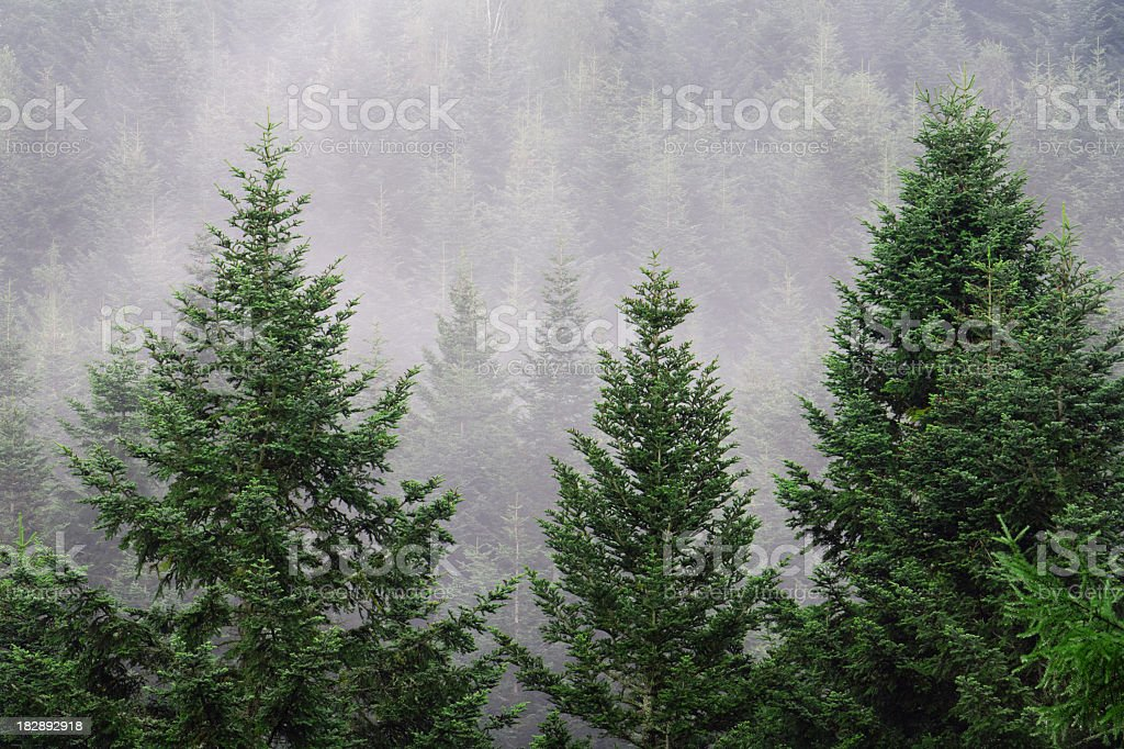 Misty forests. royalty-free stock photo