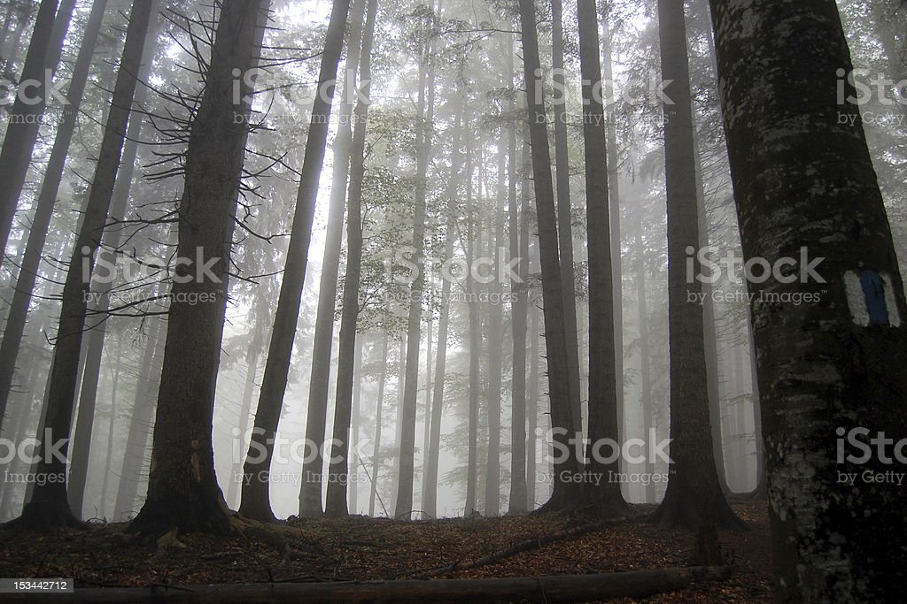 Misty forrest in Transylvania royalty-free stock photo