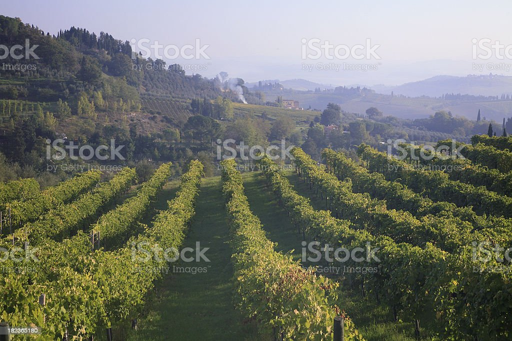 Misty Hills And Vineyards Of Chianti royalty-free stock photo
