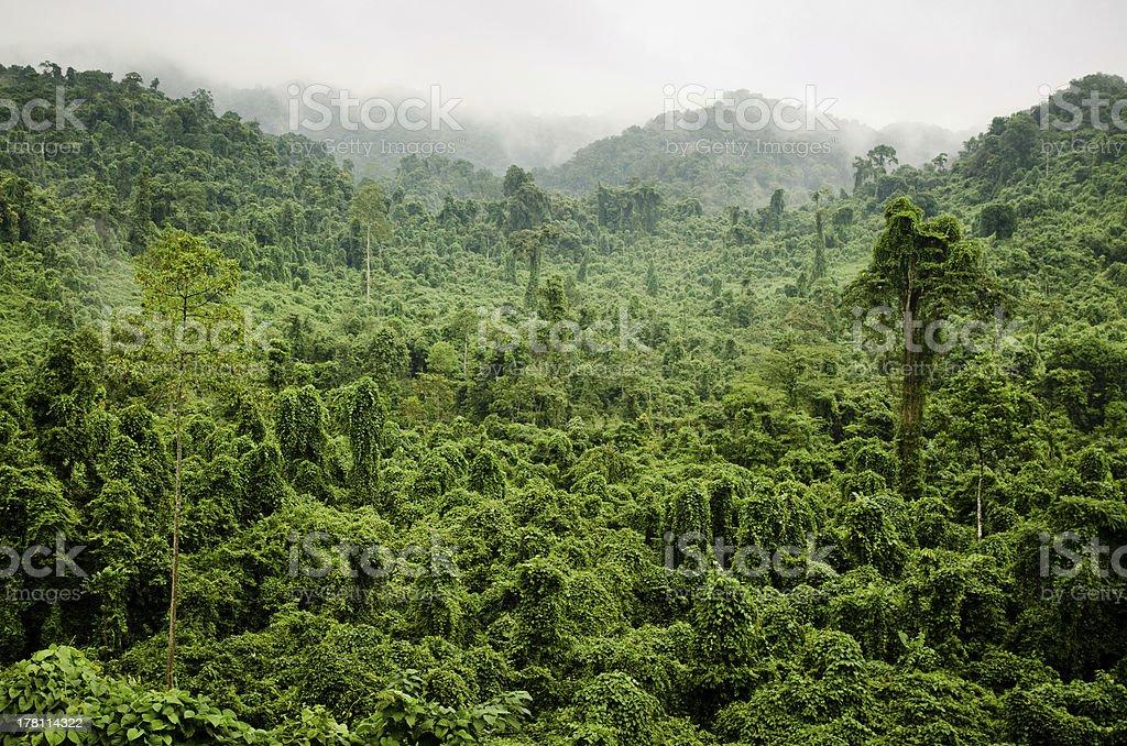 Misty Jungle, H? Tinh Province, Vietnam. stock photo