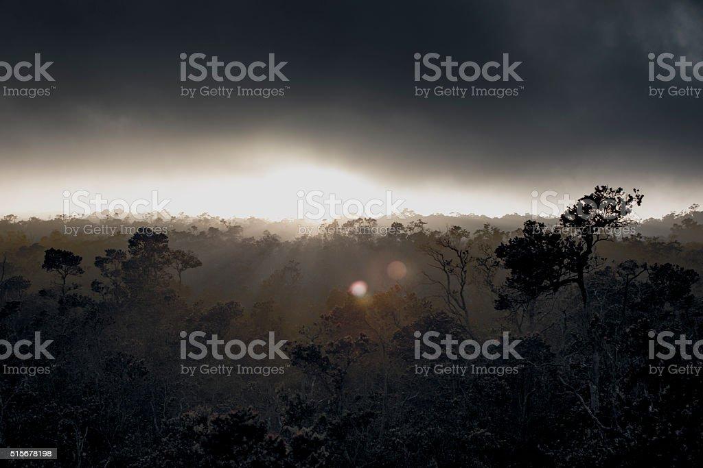 Misty Jungle Morning stock photo