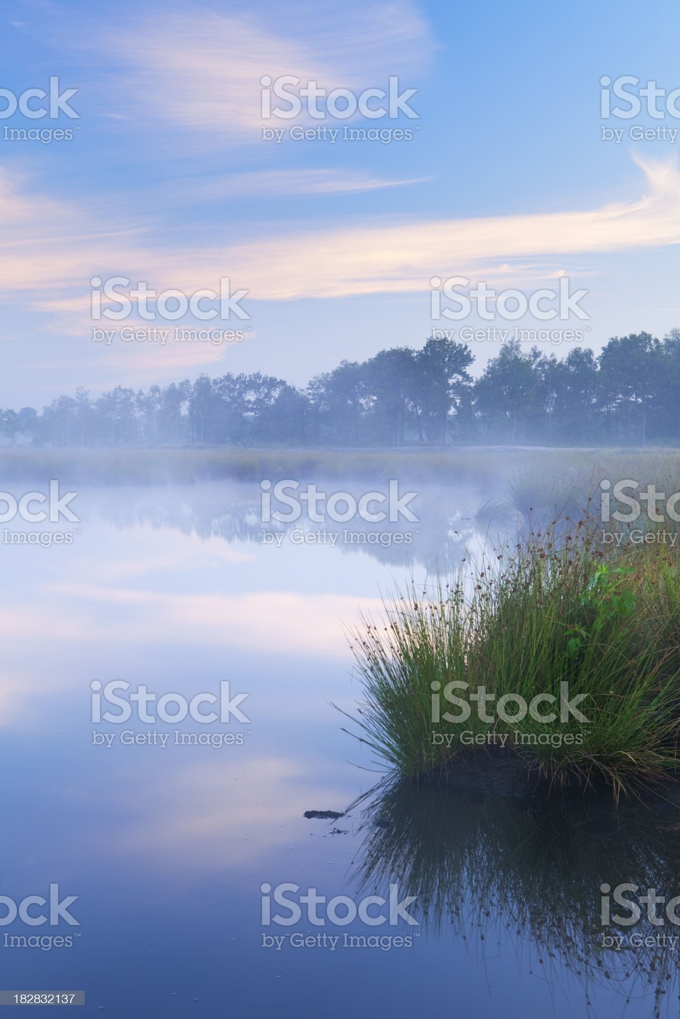 Misty lake at dawn in Kampina, Brabant, The Netherlands royalty-free stock photo