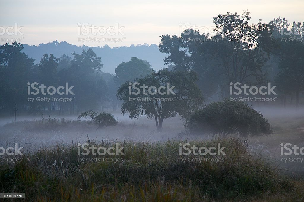 Misty Landscape in Indian Tiger Reserve at Dawn stock photo