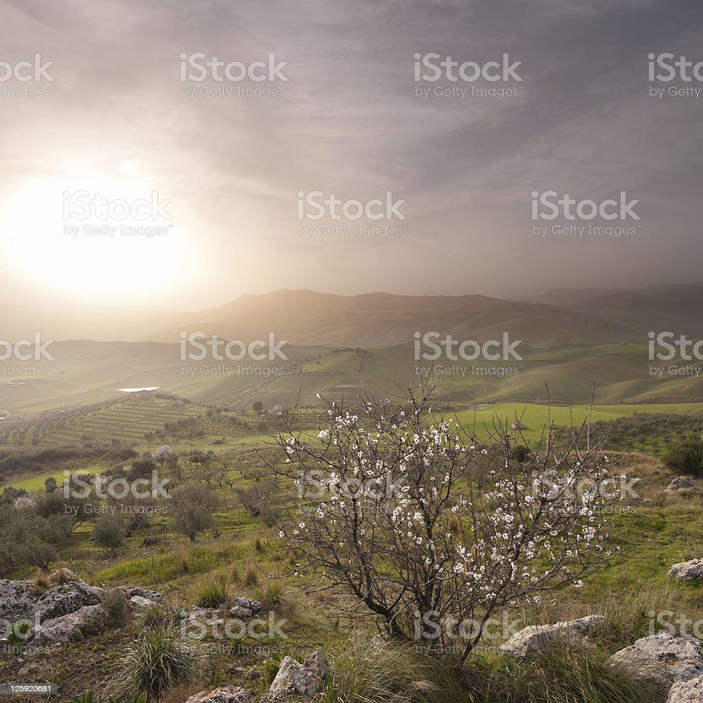 Misty Landscape Of Sicilian Hinterland royalty-free stock photo