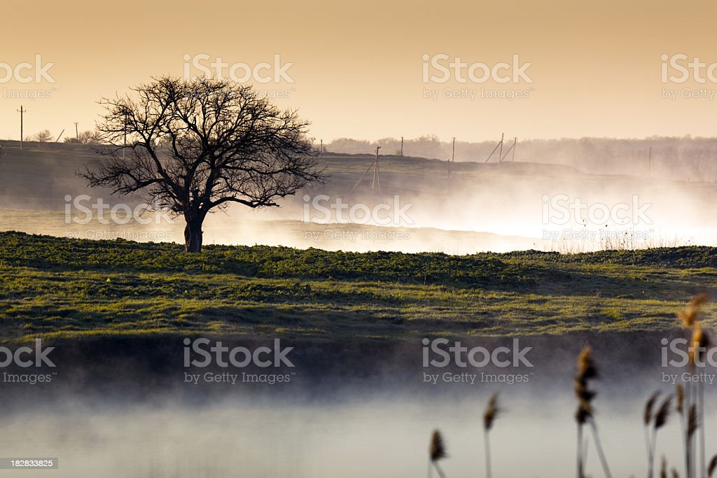Misty landscape with lonely tree royalty-free stock photo