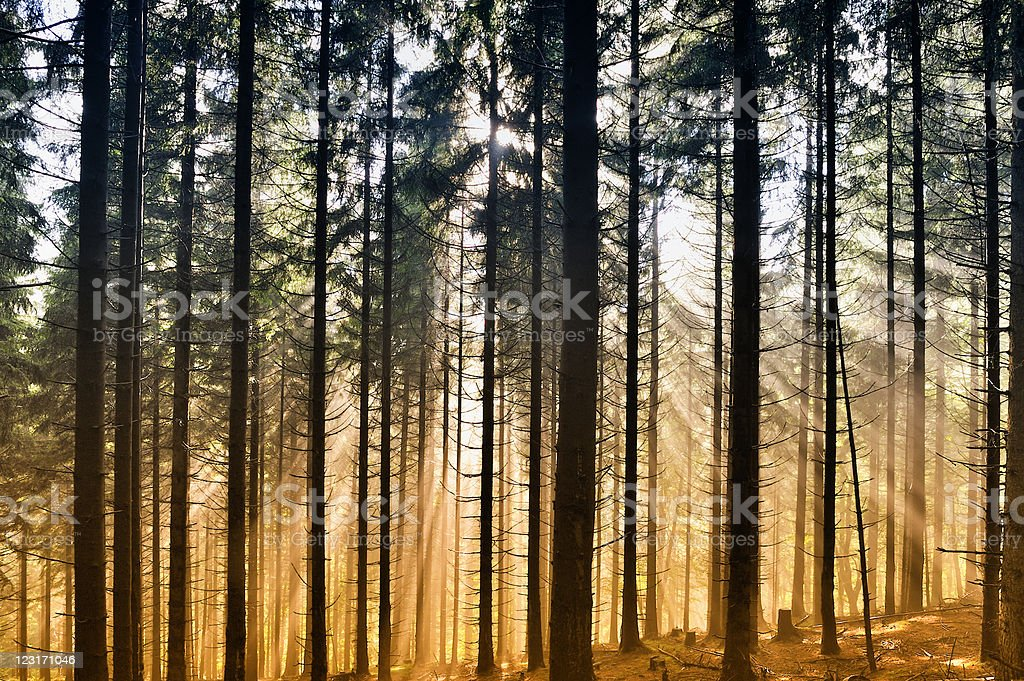 Misty landscapes in forest stock photo