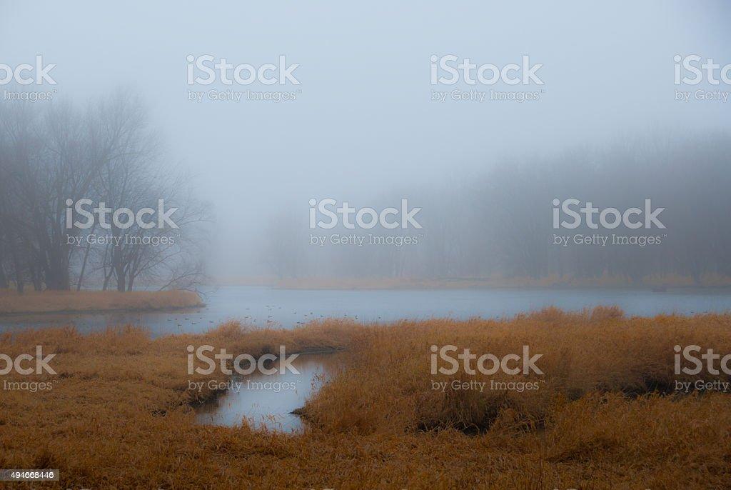Misty marsh morning stock photo