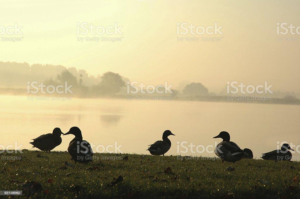 Misty Morning 2 royalty-free stock photo