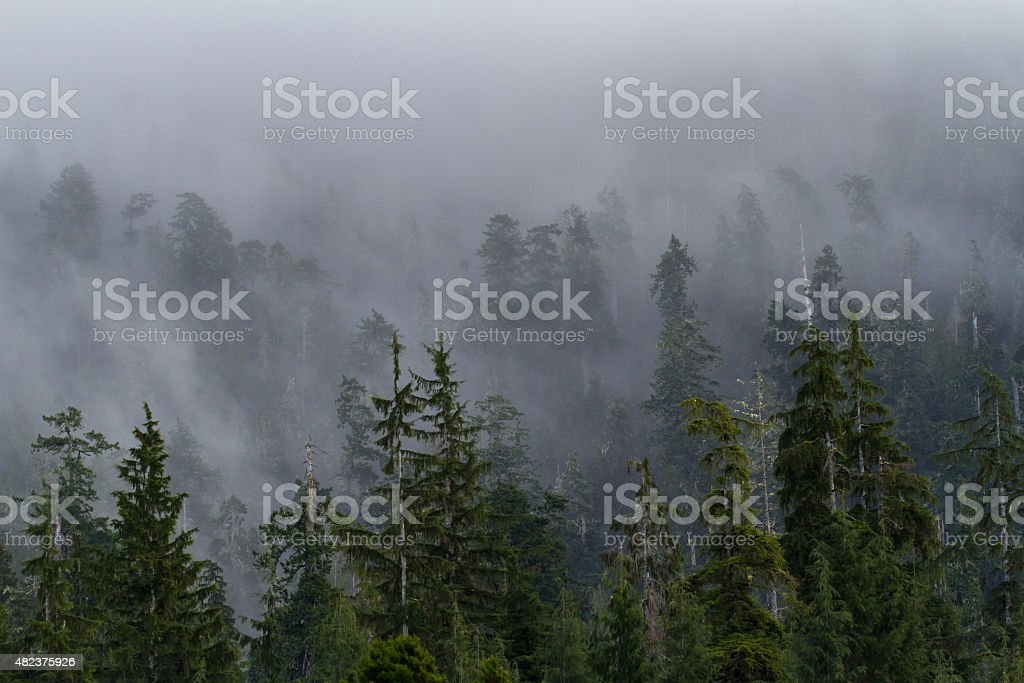 Misty Morning Forest royalty-free stock photo