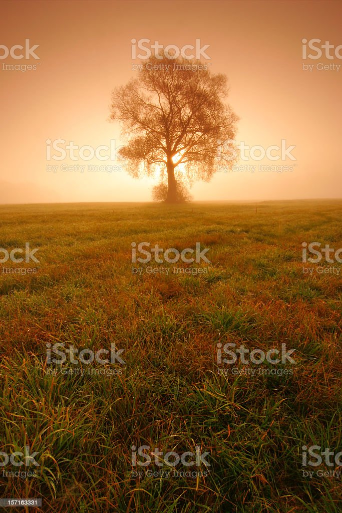 Misty Morning II royalty-free stock photo