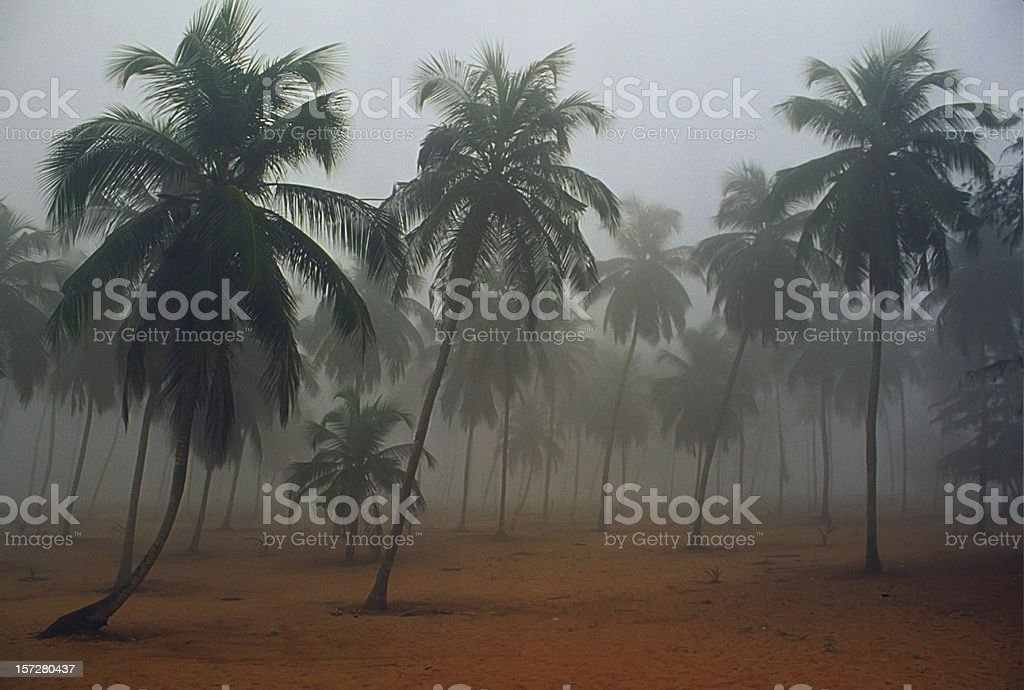 misty morning in africa royalty-free stock photo