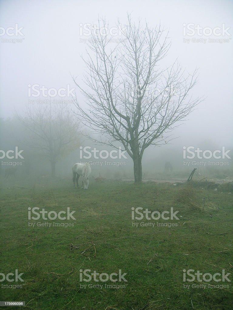 Misty morning in fairyland royalty-free stock photo