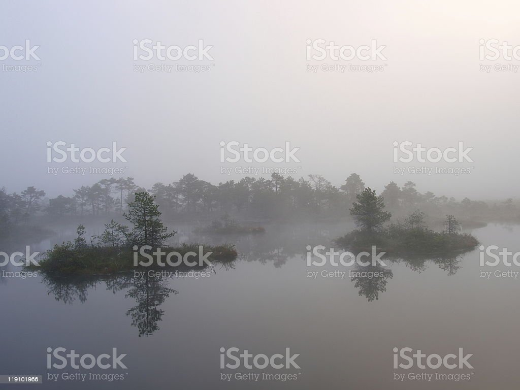 Misty morning in marsh royalty-free stock photo
