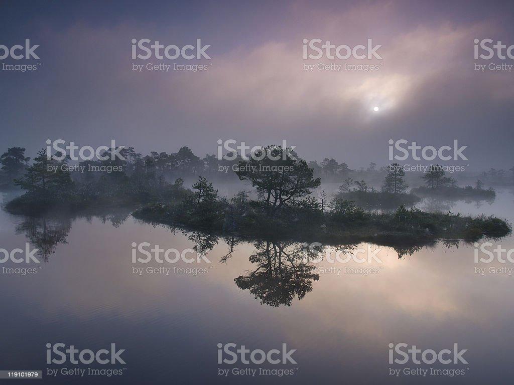 Misty morning in marsh royalty-free stock photo