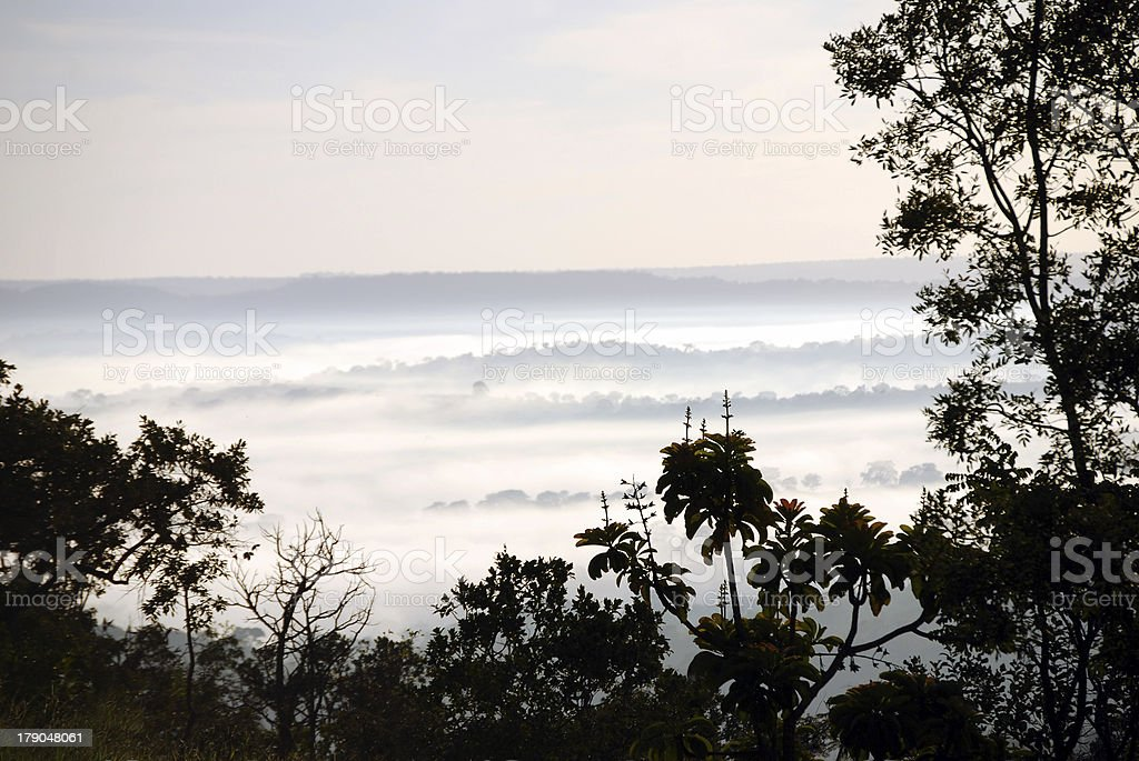 Misty morning in rainforest royalty-free stock photo