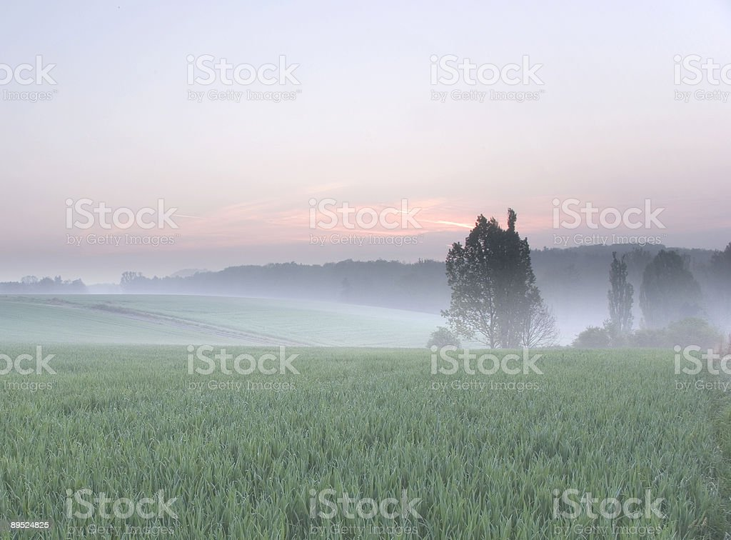 Misty morning in spring stock photo