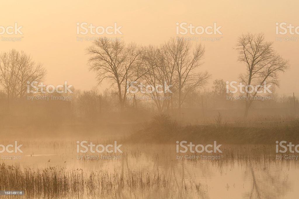 Misty morning in the countryside royalty-free stock photo