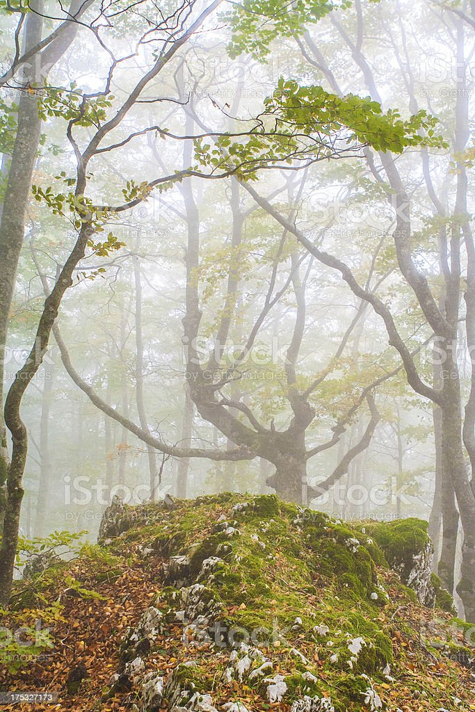Misty Morning in the Forest royalty-free stock photo