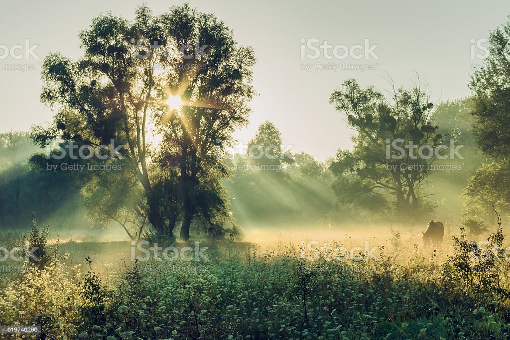 Misty morning in the woods stock photo