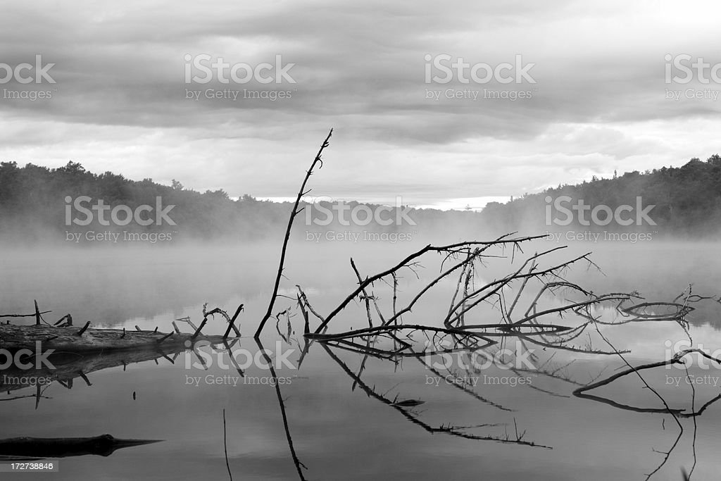 Misty Morning Lake Vermont with Driftwood royalty-free stock photo