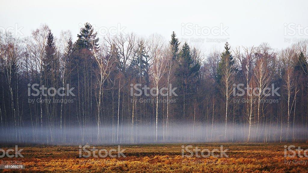 Misty morning stock photo