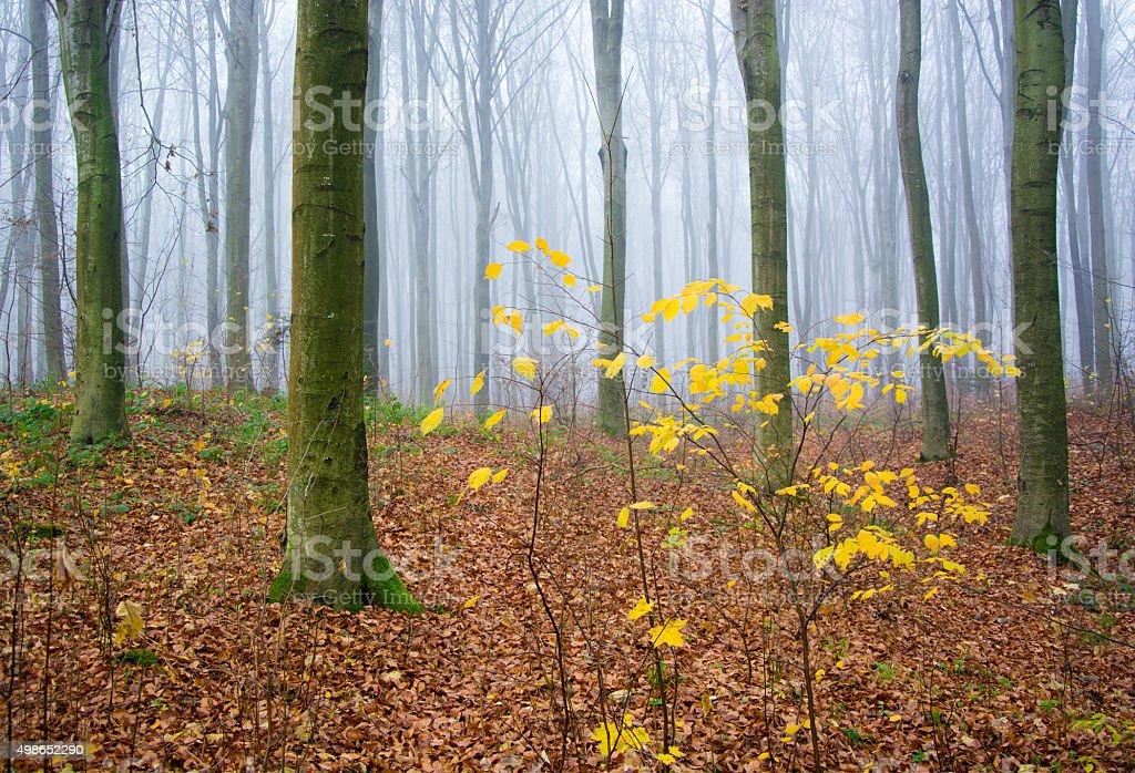 Misty por la mañana foto de stock libre de derechos
