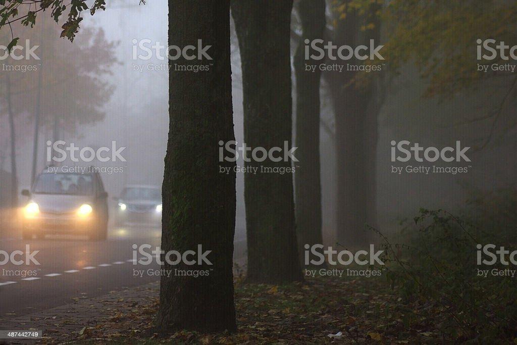 Misty morning scene royalty-free stock photo